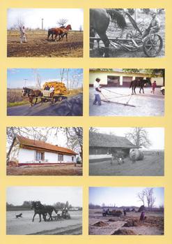 Fodor Ferenc - A Duna-Tisza közi homokhátság délkeleti részének paraszti gazdálkodása a 20. században